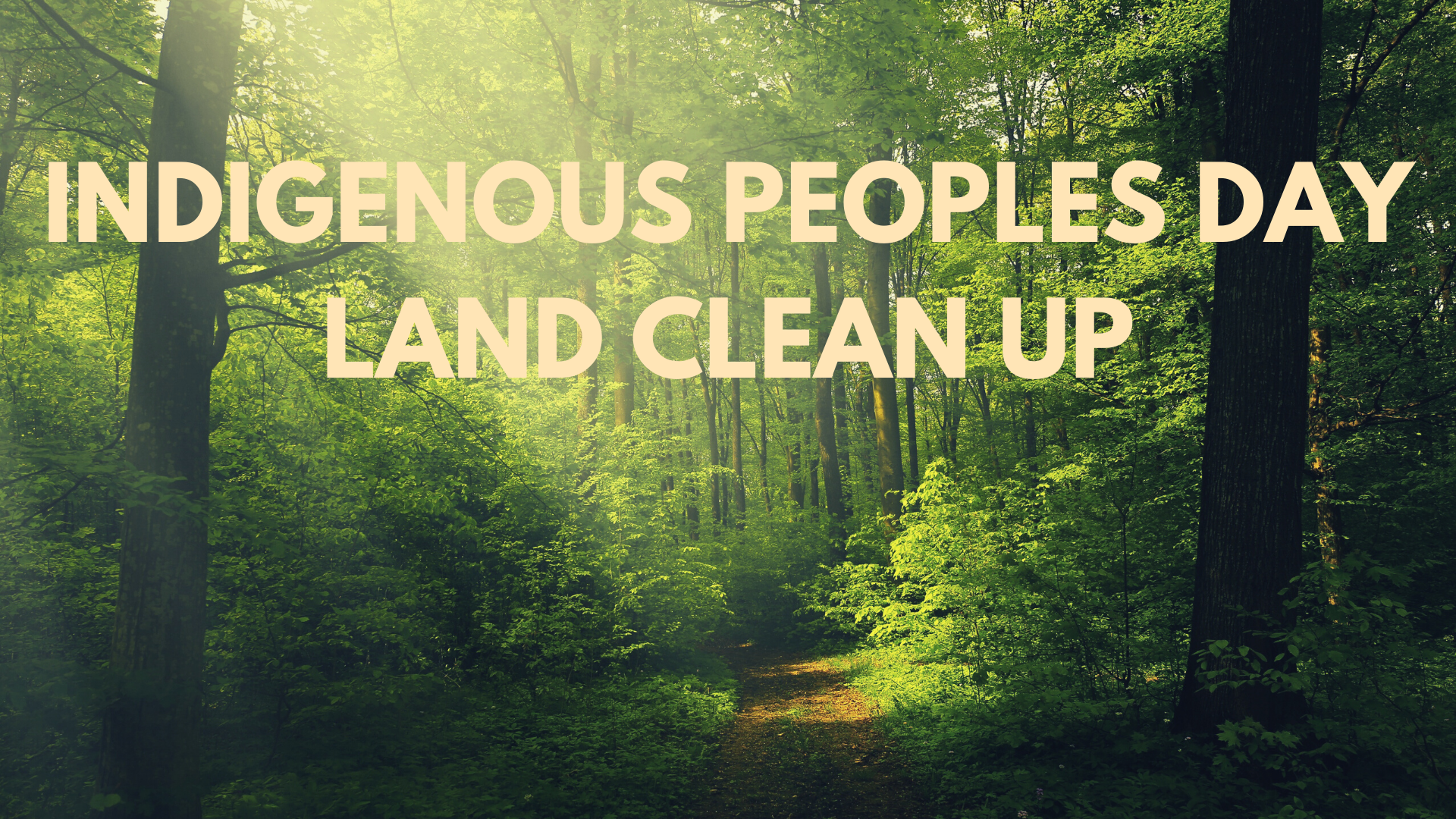 IPD land clean up